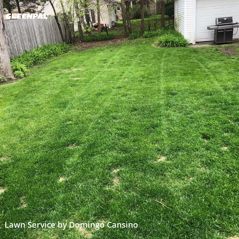 Lawn Cuttingin Whitefish Bay,53217,Lawn Cutting by Tri Stars Landscaping, work completed in Aug , 2020