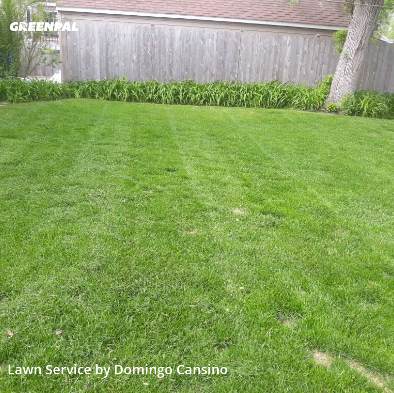 Lawn Carein Whitefish Bay,53217,Grass Cutting by Tri Stars Landscaping, work completed in Aug , 2020