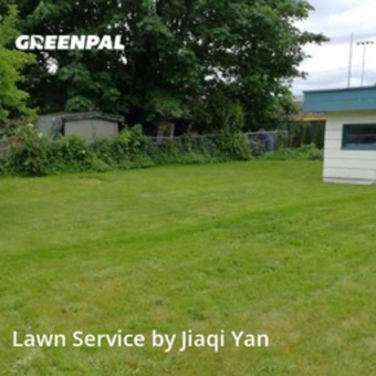 Lawn Mowin Auburn,98002,Yard Mowing by Small Guy Lawn Mowing, work completed in Jun , 2020