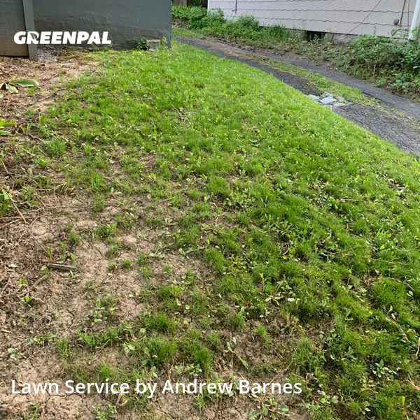 Lawn Cuttingin Albany,12209,Grass Cutting by Ab Landscaping, work completed in Jul , 2020