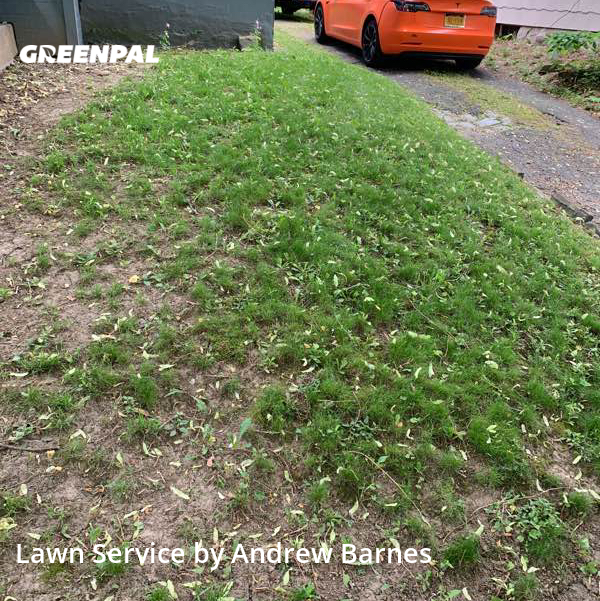 Lawn Cutin Albany,12209,Grass Cutting by Ab Landscaping, work completed in Jul , 2020