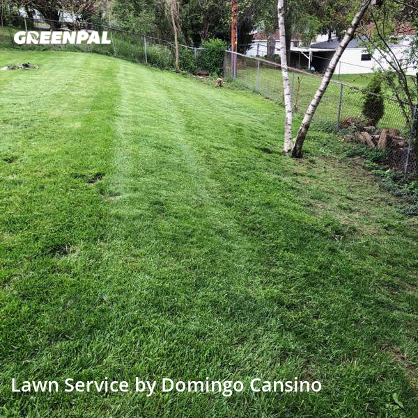 Lawn Cutin Waukesha,53189,Yard Mowing by Tri Stars Landscapin, work completed in Jul , 2020