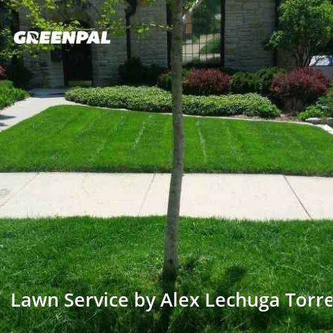 Lawn Cuttingin Wauwatosa,53226,Lawn Mowing Service by Torres Lawn Care, work completed in Aug , 2020