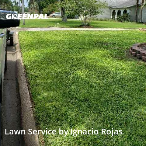 Yard Mowingin Harlingen,78552,Lawn Mow by Rojas Yard Service, work completed in Aug , 2020