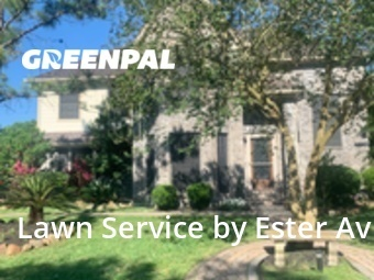 Lawn Mowing Servicein Pasadena,77505,Lawn Mowing by Valladares Landscap, work completed in Aug , 2020
