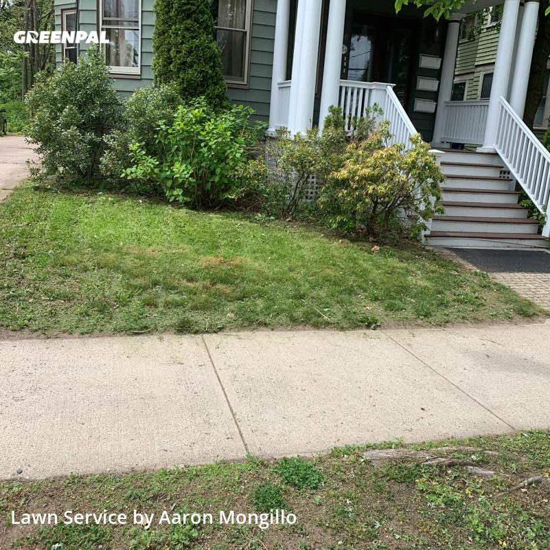 Lawn Maintenancein New Haven,6511,Grass Cut by Ace Lawn Care, work completed in Aug , 2020