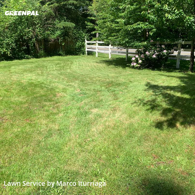 Lawn Mowin Issaquah,98075,Lawn Mow by Toacc Llc, work completed in Aug , 2020