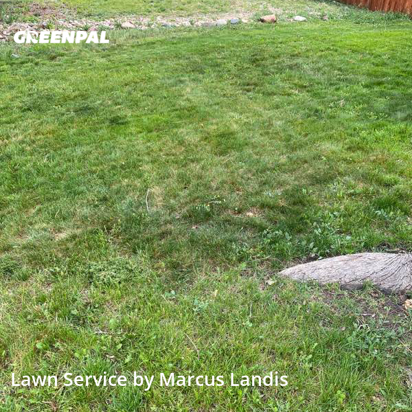 Lawn Care Servicein Aurora,80011,Lawn Mow by C&M Landscape, work completed in Sep , 2020