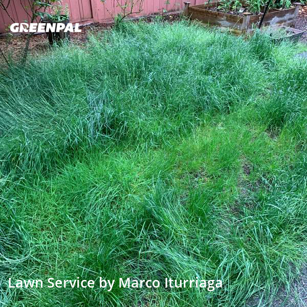 Lawn Care Servicein Issaquah,98029,Yard Cutting by Toacc Llc, work completed in Aug , 2020