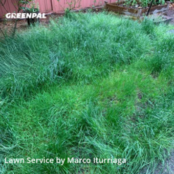 Lawn Carein Issaquah,98029,Lawn Mowing Service by Toacc Llc, work completed in May , 2020