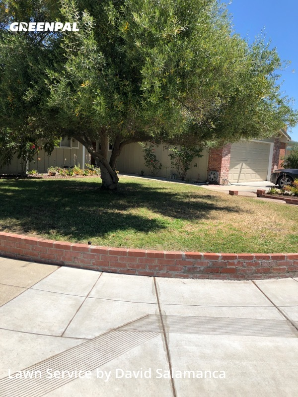 Lawn Mowing Servicein Sunnyvale,94086,Lawn Mow by E&D Gardening, work completed in Jul , 2020