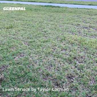 Lawn Care Servicein Oviedo,32765,Lawn Care by Sea Palm Services, work completed in Jul , 2020