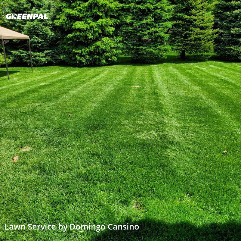 Lawn Mowin Waukesha,53189,Lawn Maintenance by Tri Stars Landscapin, work completed in Jul , 2020