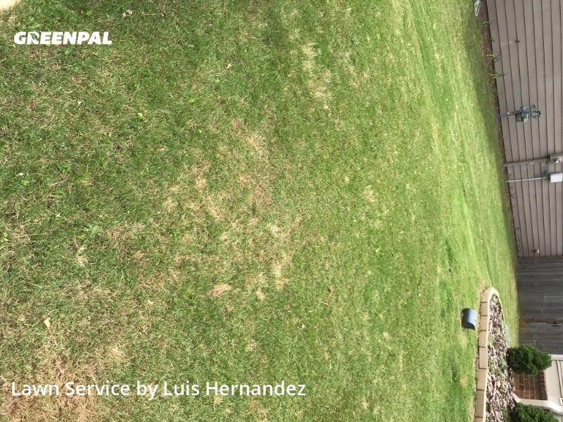 Lawn Servicein Canton,30115,Yard Cutting by Luiggy Lanscaping, work completed in Jul , 2020