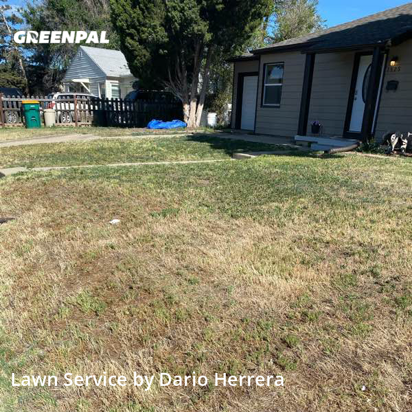 Grass Cuttingin Westminster,80030,Lawn Cutting by Tbtfw Landscaping , work completed in Jul , 2020