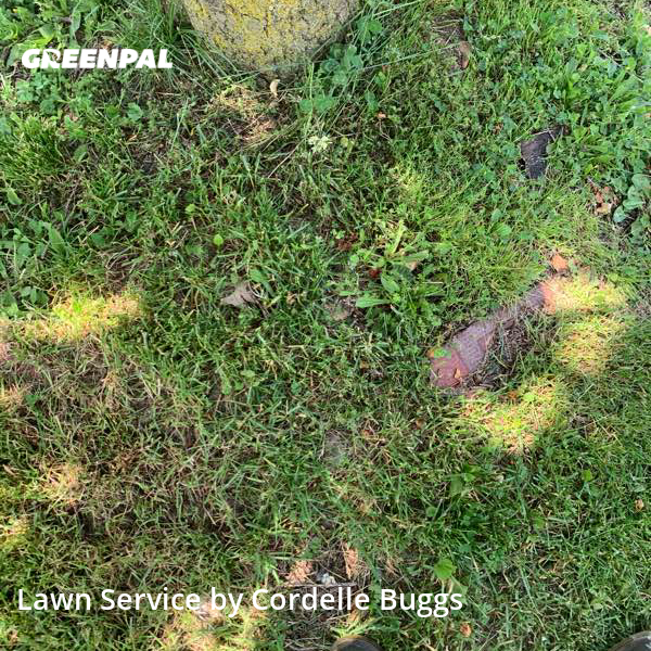 Lawn Carein Maple Heights,44137,Grass Cut by Sovereign Holding , work completed in Jul , 2020