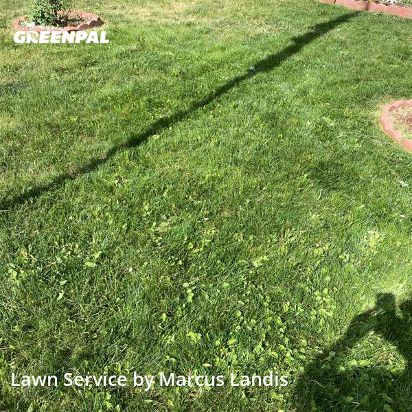 Lawn Cuttingin Lakewood,80214,Lawn Mow by C&M Landscape, work completed in Aug , 2020