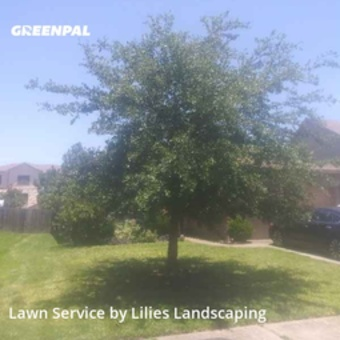 Lawn Maintenancein Tomball,77375,Lawn Service by Lilies Landscaping , work completed in Jul , 2020