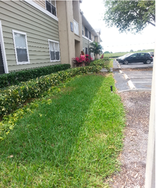 Yard mowing company in Tampa, FL, 33613