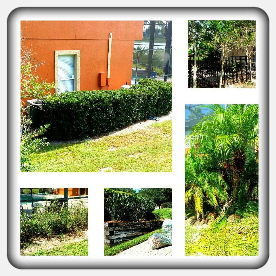 Yard mowing company in Apopka , FL, 32704