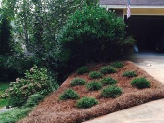 Yard mowing company in Grayson , GA, 30017