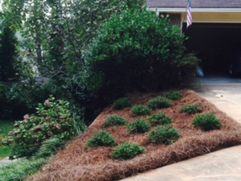 Yard mowing company in Grayson , GA, 30017