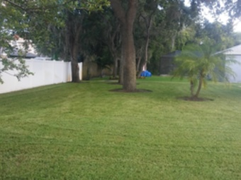 Yard mowing company in St.Petersburg, FL, 33712