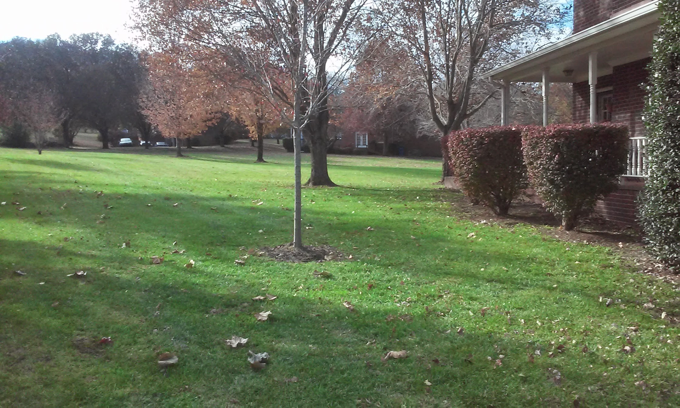 Yard mowing company in Nashville, TN, 37218