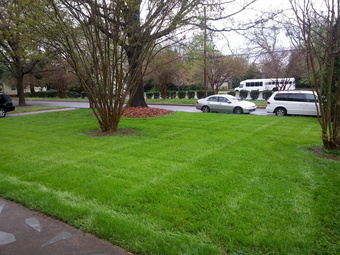 Yard mowing company in Charlotte, NC, 28216
