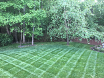 Yard mowing company in Charlotte, NC, 28207