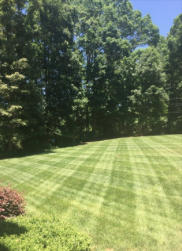 Yard mowing company in Charlotte, NC, 28215