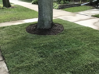 Yard mowing company in Chicago, IL, 60630