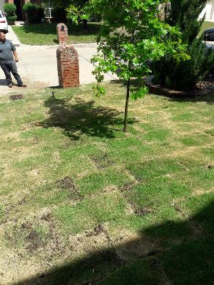 Yard mowing company in Fort Worth, TX, 76110