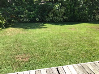 Yard mowing company in Tampa, FL, 33629