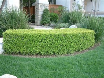 Yard mowing company in Coral Springs , FL, 33065