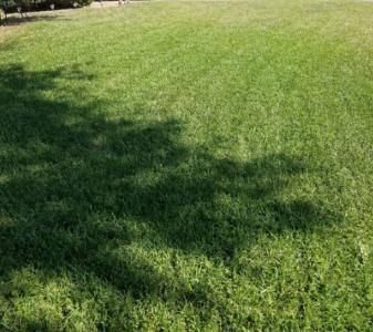 Yard mowing company in Fort Worth, TX, 76162