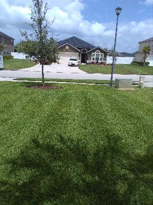 Yard mowing company in Saint Augustine, FL, 32086