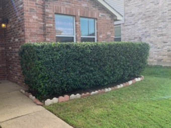 Yard mowing company in Fort Worth, TX, 76115