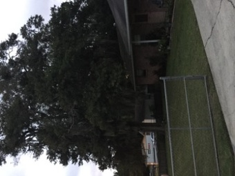Yard mowing company in Lakeland , FL, 33810