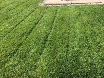 Yard mowing company in Mathis, TX, 78407