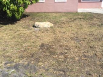 Yard mowing company in Sunrise, FL, 33313
