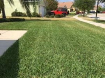 Yard mowing company in Riverview, FL, 33578