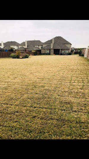 Yard mowing company in Cedar Hill, TX, 75104