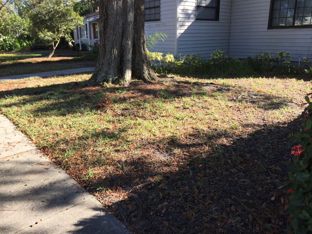 Yard mowing company in St Petersburg, FL, 33713
