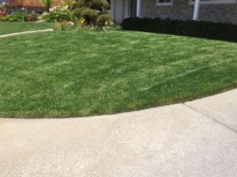 Yard mowing company in Stockton, CA, 95209