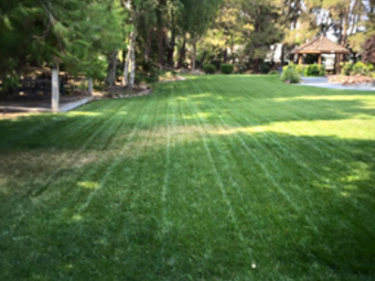Yard mowing company in Stockton, CA, 95202