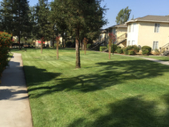Yard mowing company in Bakersfield, CA, 93301