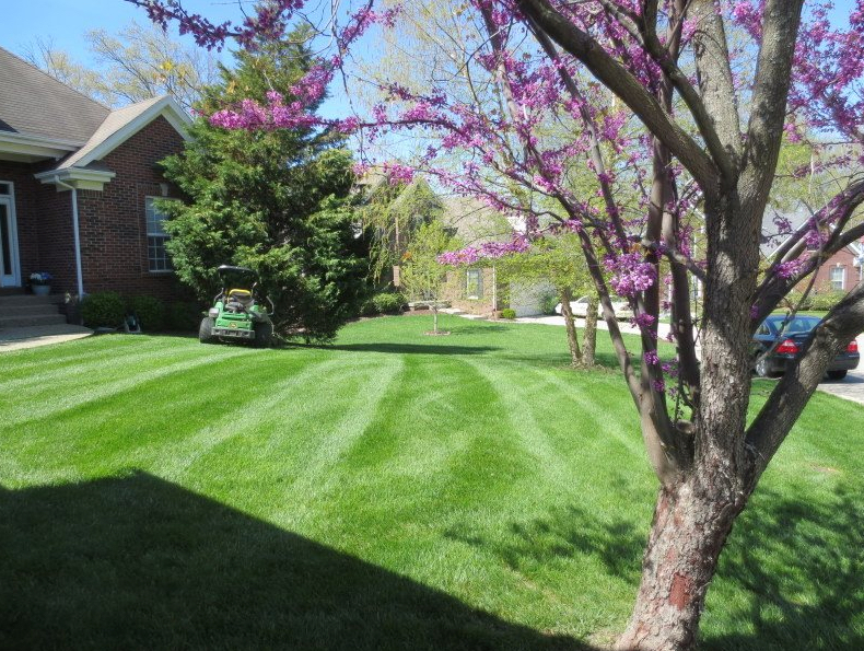 Yard mowing company in Louisville, KY, 40219