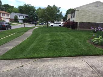 Yard mowing company in Louisville , KY, 40291