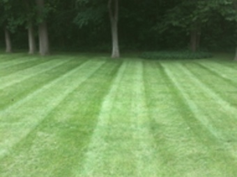 Yard mowing company in Sylvania , OH, 43613